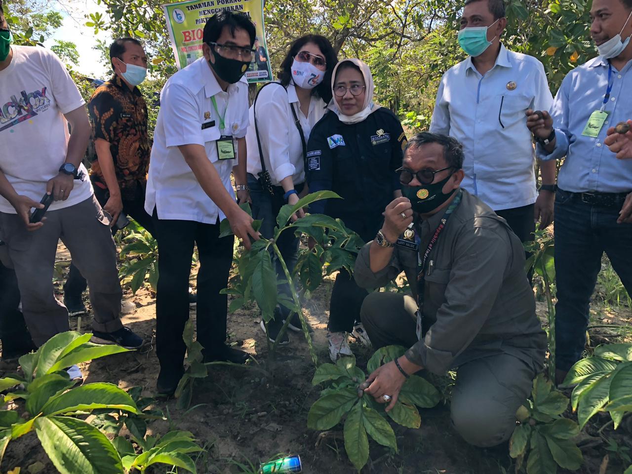 Kementan Sosialisasi Budidaya Porang dan Bantuan KUR Pertanian di Kab. Sidrap