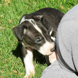 Mantle girl @ 6 weeks