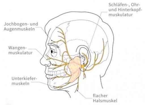 Herzlich Willkommen! : Die Lösung einer Nervenlähmung endlich gefunden!