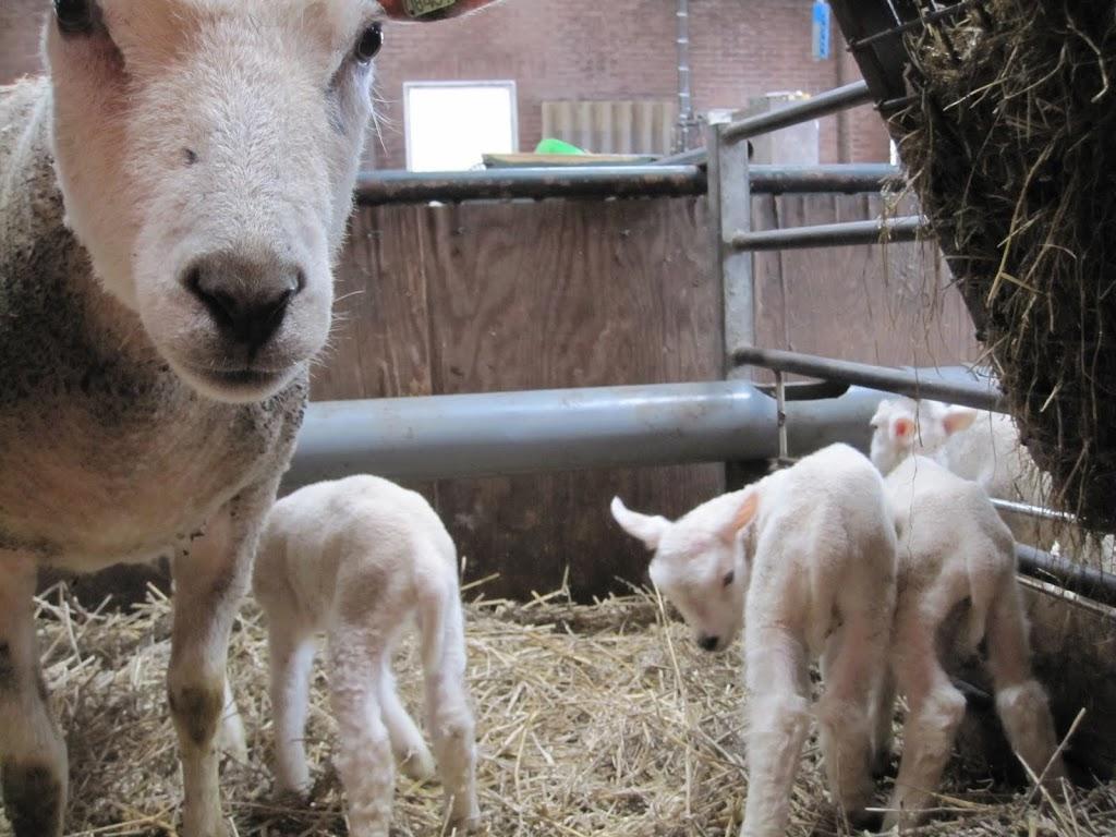Welpen - Naar de boerderij - IMG_5503.JPG