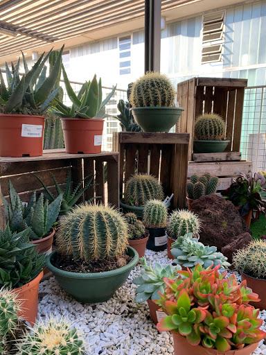 Cactus y suculentas del centro de jardinería FUPAR