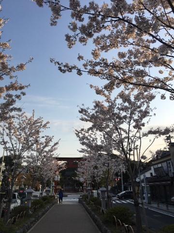 鎌倉ヴィエナ Kamakura is in the city of flowers like Vienna