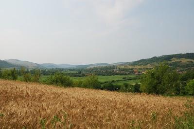 Getreidefeld bei Racas