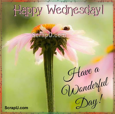 Happy Wednesday Cards