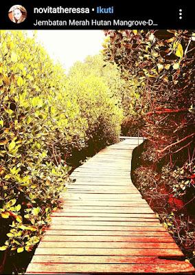 Jembatan merah mangrove rembang