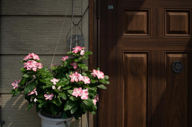 200808 都橋の店入口前の花