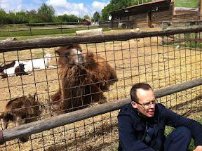 Talking to animals...