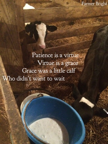 The Udder Side A Poem For Grace The Calf
