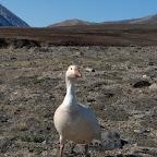 Groenland Natuur