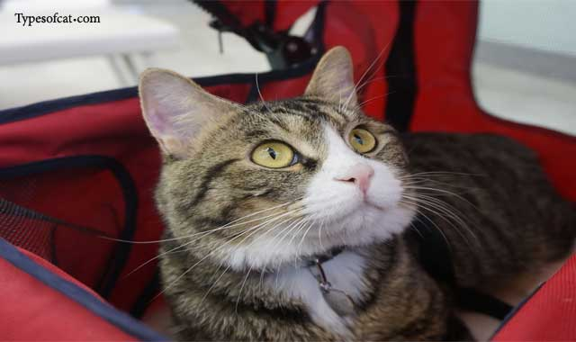 common health problems for cats