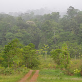 La lisière de forêt, biotope de Parides anchises anchises. Carbets de Coralie, piste Coralie (Cacao, Guyane), 1er novembre 2012. Photo : J.-M. Gayman