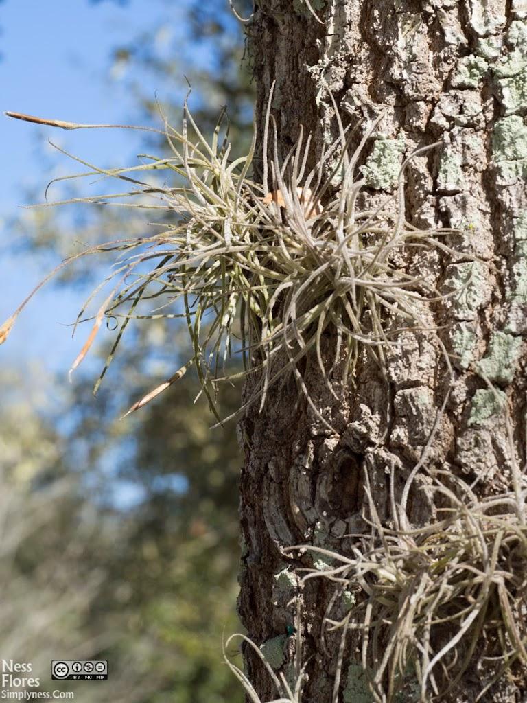 Tree60mmF90-1220060