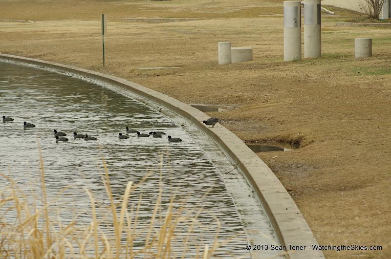 01-26-13 White Rock Lake - IMGP4361.JPG