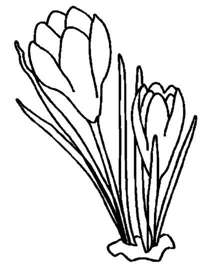 [22+-+flores+y+primaveras+%2820%29%5B2%5D]