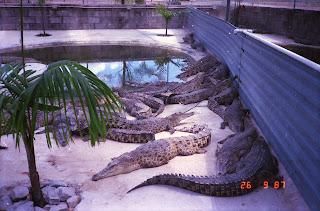 2140NT Croc Farm