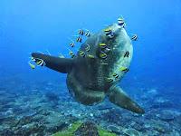 Diving in Bali, Diving in Nusa Penida island, Manta point, Cristal bay, Gamat Bay