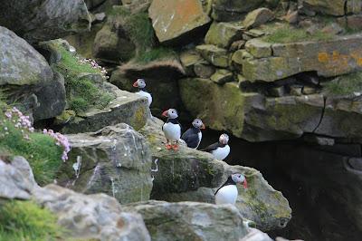 Shetland Foula