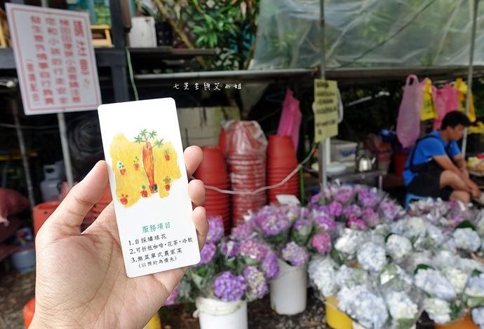 6 陽明山 繡球花 大梯田 竹子湖