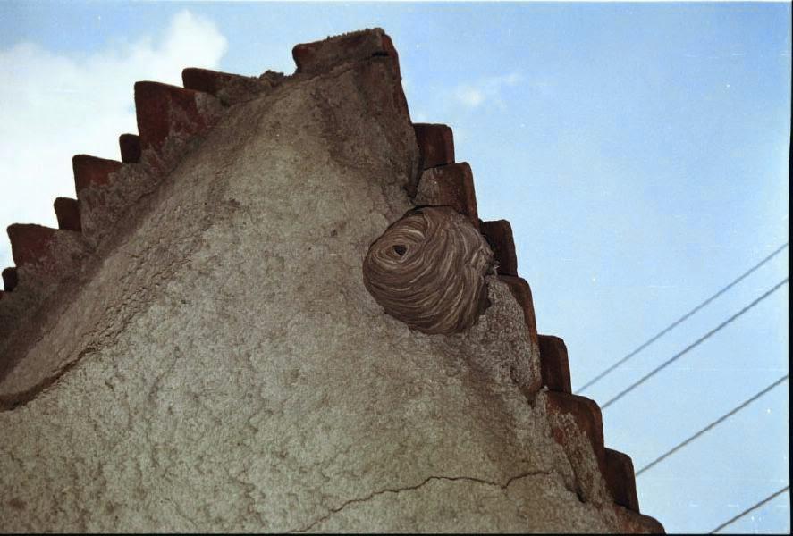 Székelyzsombor 2004 - img35.jpg