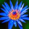 flower1 (1 of 1).JPG