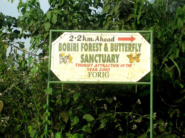 Bobiri Forest Butterfly Sanctuary (Ghana), 17 janvier 2006. Photo : Henrik Bloch