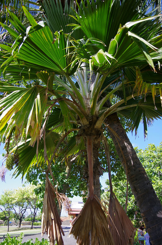 06-19-13 Hanauma Bay, Waikiki - IMGP7465.JPG