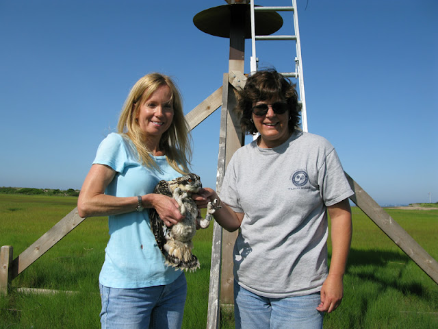 Osprey Banding - Pictures%2B100.jpg