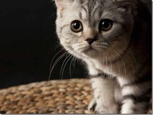 fotos de gatos (11)
