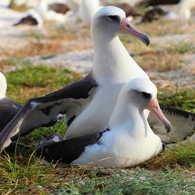 The World's Oldest Bird is 64, And She Just Laid an Egg