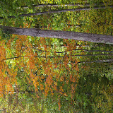 Clairière en Forêt de Dreux, 8 octobre 2009. Photo : J.-M. Gayman