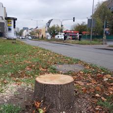 20171028_Baum-Eigentümerversammlung-Thomas_Kahlix-0083