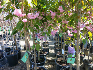 2015 Nursery Photos for website update 3-25-2015 2-05-19 AM 4000x3000
