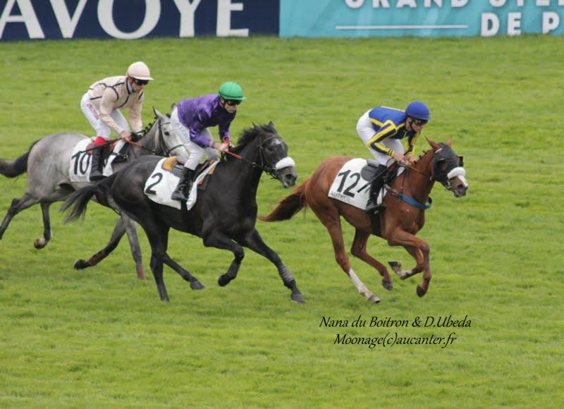 Photos Auteuil 16-05-2015 Week-end printanier de l'obstacle  IMG_9236