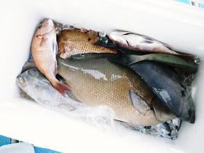 Photo: そして、ワタナベさんのBOXです。 ひときわ目立つ魚が・・・。