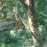 Pittsburgh Zoo Revisited - DSC05083.JPG