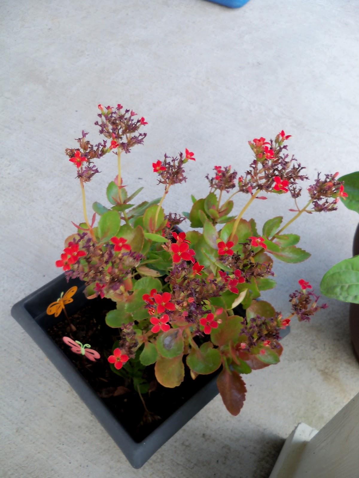 Gardening 2011 - 100_8256.JPG