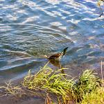 20140817_Fishing_Pugachivka_026.jpg