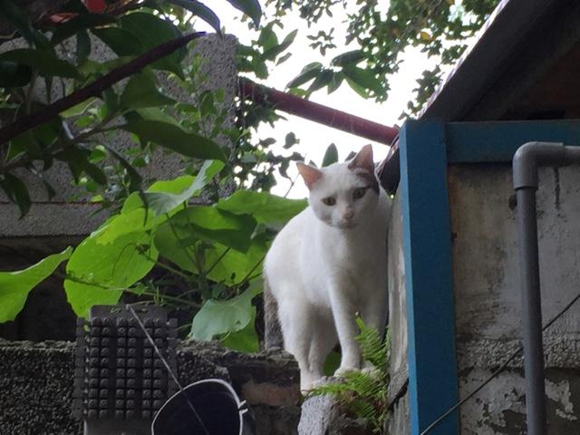 中山の猫 屋根に上る途中