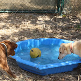 Quinta Life - Pool Time