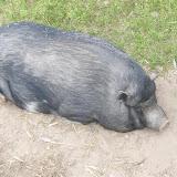 Tierfarm 26.05.2009