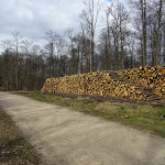 Forêt de Montmorency : bois