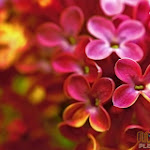 Flower 008_1280px.jpg