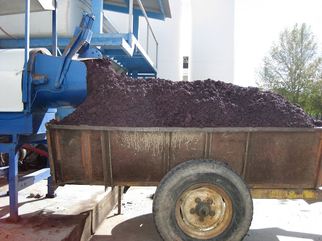 This is from one of the winery tours.  Lots of grape pulp and stuff.  Also used as fertilizer.  Grapes get fertilized by their already crushed friends and by goat manure.  I'm glad I'm not a grape.