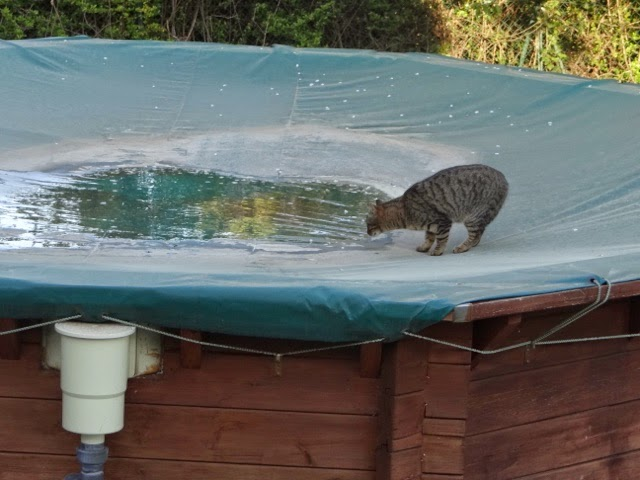 La maison du faucon le petit chat sur la piscine for Piscine fait maison