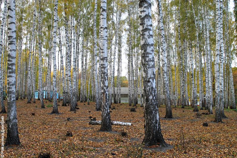 Парк Маршалково в г. Строитель