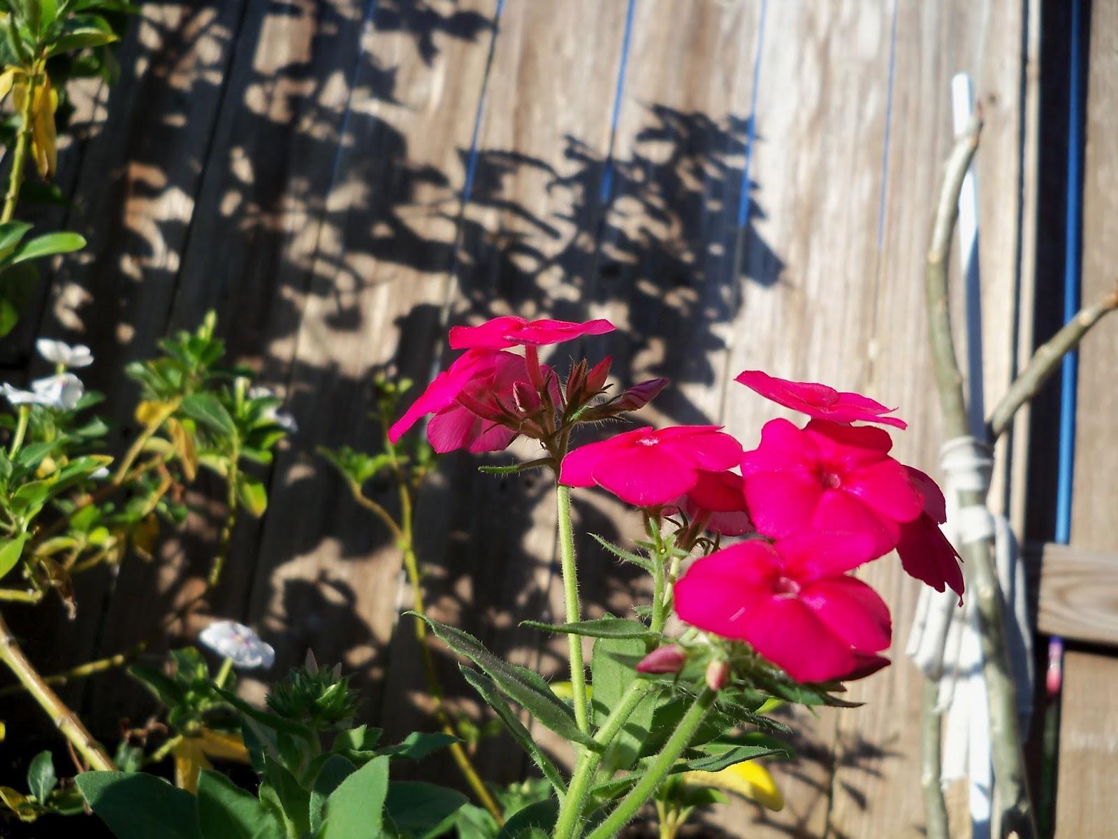 Gardening 2013 - 115_5378.JPG