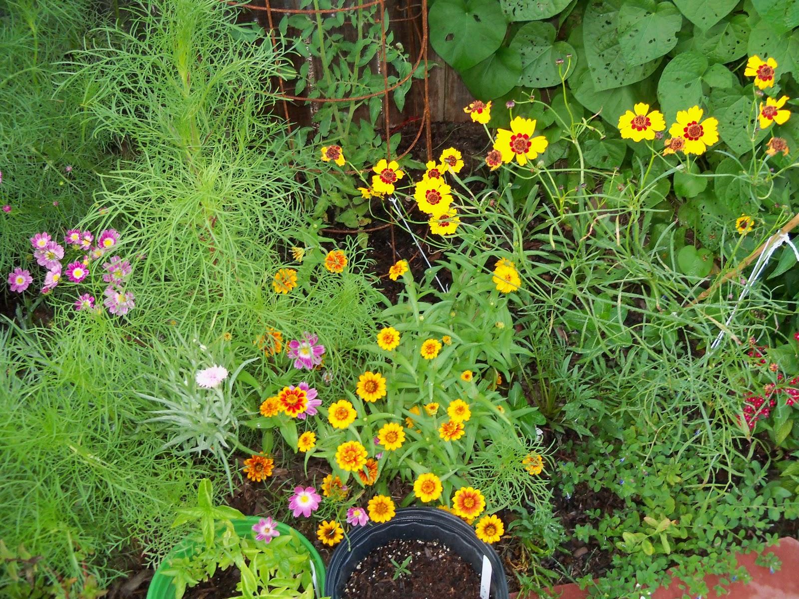 Gardening 2010, Part Three - 101_3959.JPG