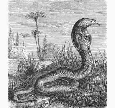Snake Island   सांपों का द्वीप   एक ऐसा आइलैंड, जहां इंसानों का नहीं सांपों का चलता है राज
