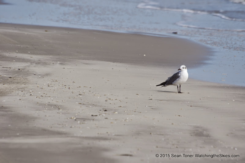 02-07-15 Corpus Christi & South Padre Island - _IMG0432.JPG