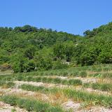 Les Hauts-Lisières vues depuis le Ravin des Fouix (426 m), Saint-Martin-de-Castillon (Vaucluse), 9 mai 2014. Photo : J.-M. Gayman